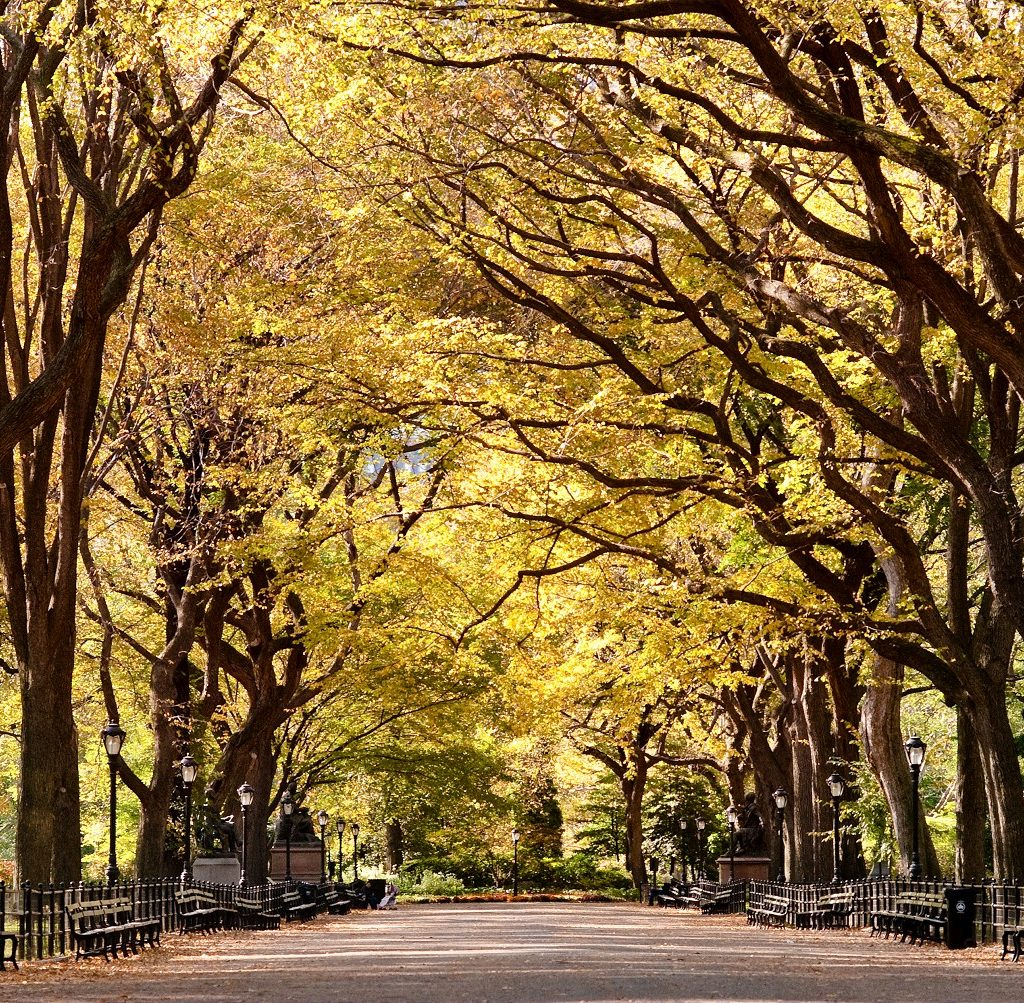 Autumn In New York, Reportage 2011